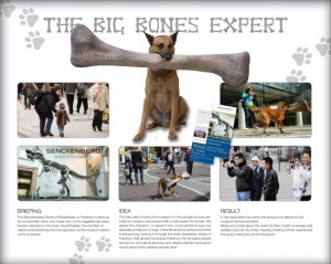 Big Bones Experts
