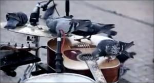 Pigeon Jazz in Johannesburg