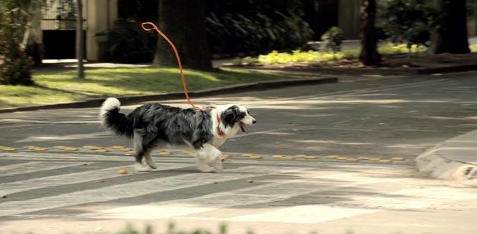 cane a spasso con persona invisibile
