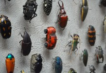 The VW Bug hidden in Cleveland Museum