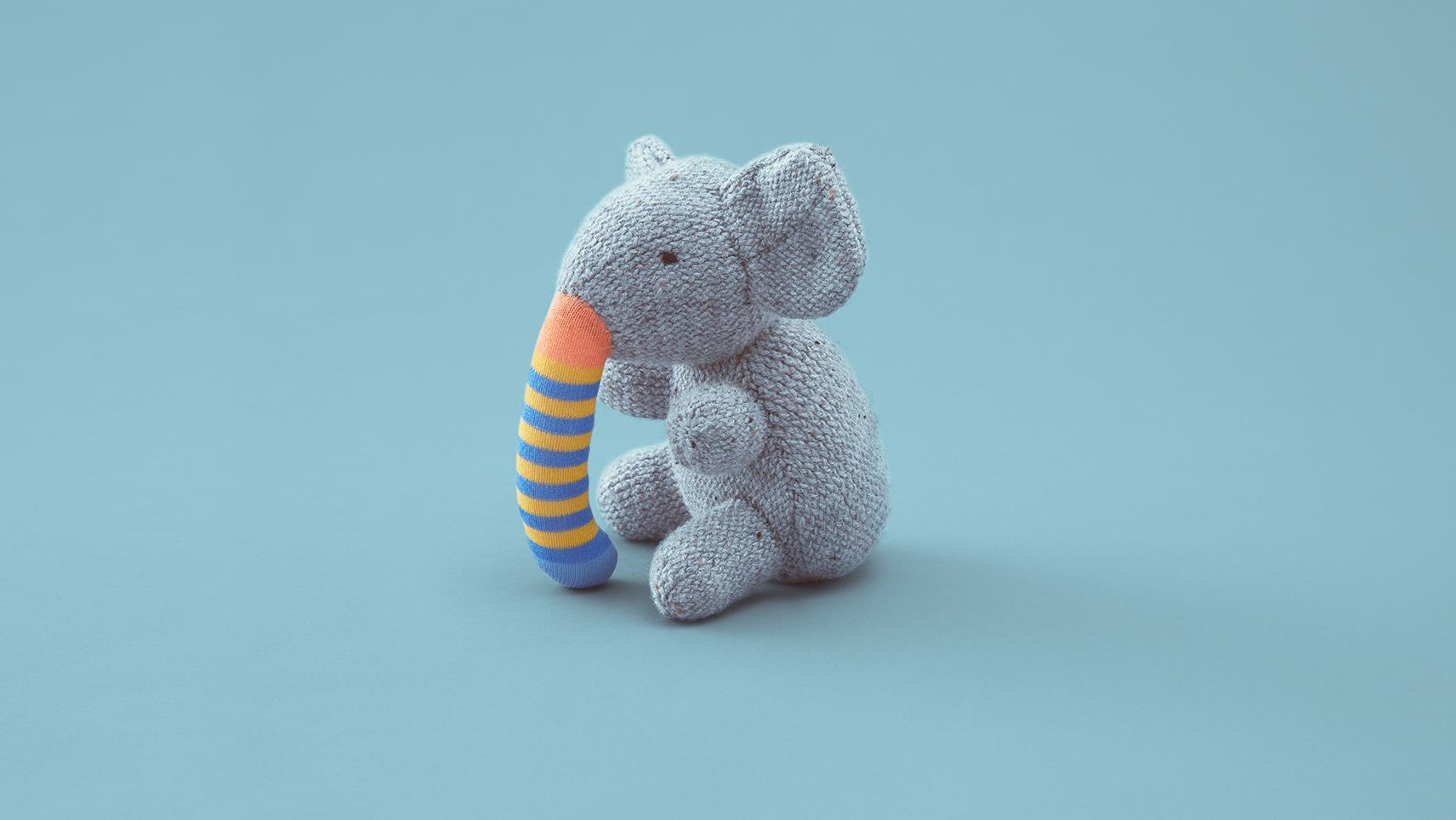 Donazione di Organi: elefante proboscide diversa