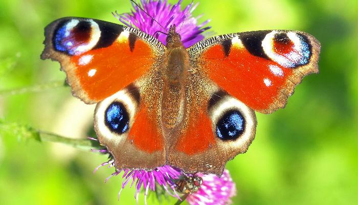 Simmetria: ali di farfalla